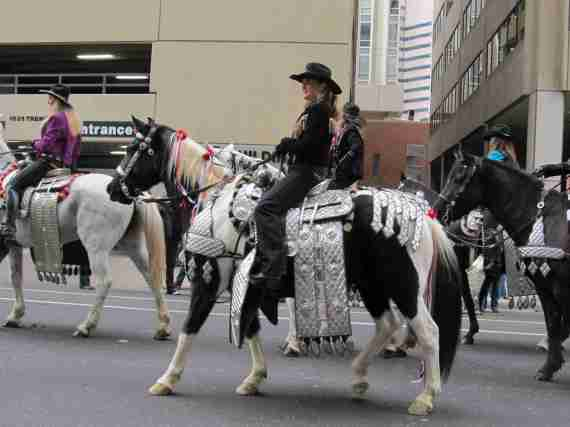 Stock show parade 048