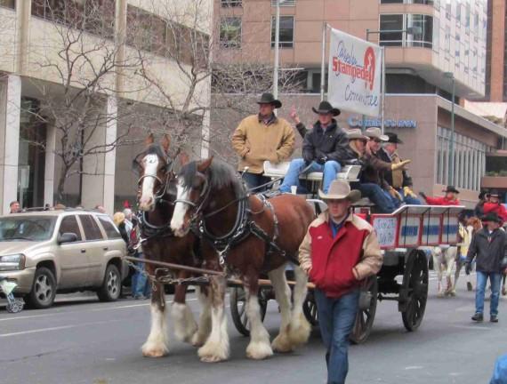 Stock show parade 053