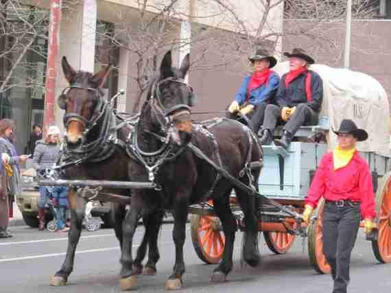 Stock show parade 086
