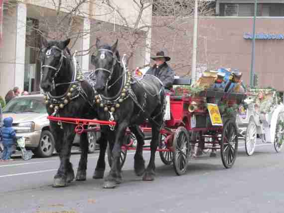 Stock show parade 091