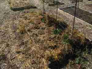 Planting 016