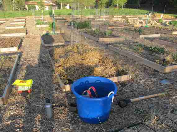 Re-covered with the old straw to preserve moisture until I put plants in. Since I'm mostly transplanting into this bed, the straw may well stay all summer, since seedlings won't need to grow through it.