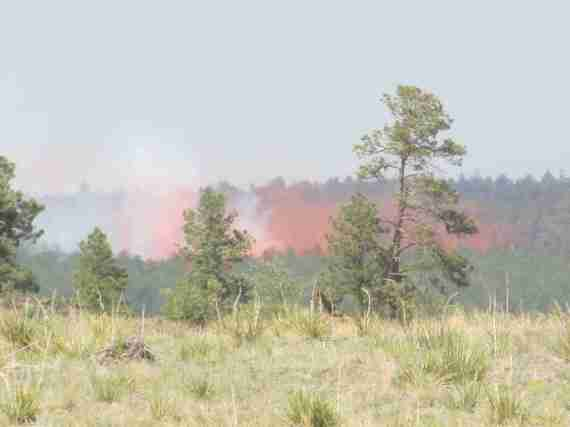 Day 3 Black Forest Fire 017
