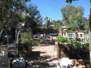Gardens, chickens, ducks, doves, rabbits, cats, and a pair of very friendly dogs. All in one urban back yard.