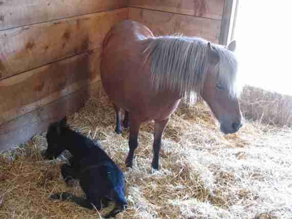 Ponies, garden 033